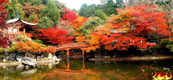 japanese_autumn_daigo-ji-temple