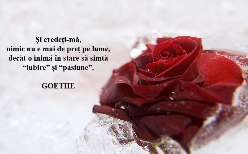 sentimente-inghetate-3 copy